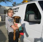 Humane Society puppy