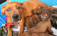 Dog litter