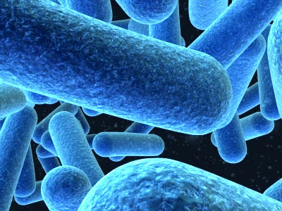 bacterial rods