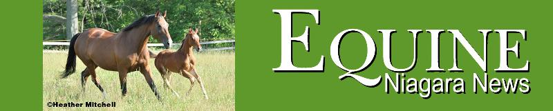 ENN Banner Logo 2013