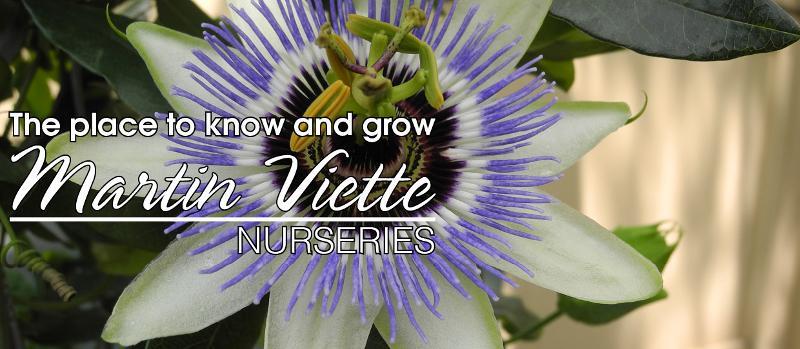 Gardening News From Martin Viette Nurseries 5 23 13