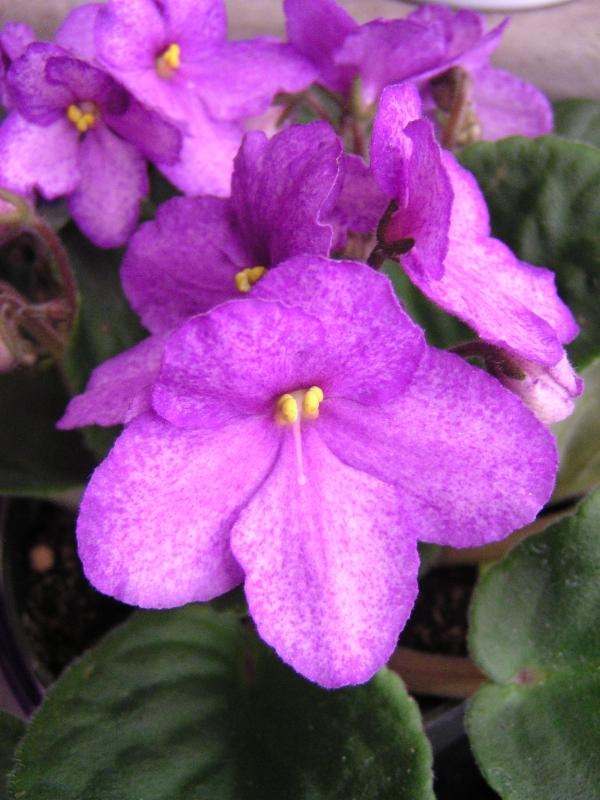 Gardening News From Martin Viette Nurseries 1 30 14