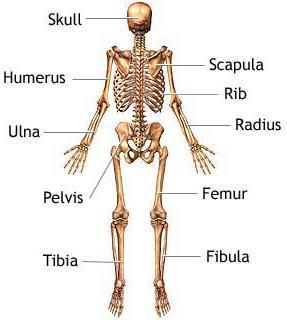 skeleton_1