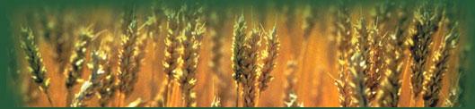 grain picture