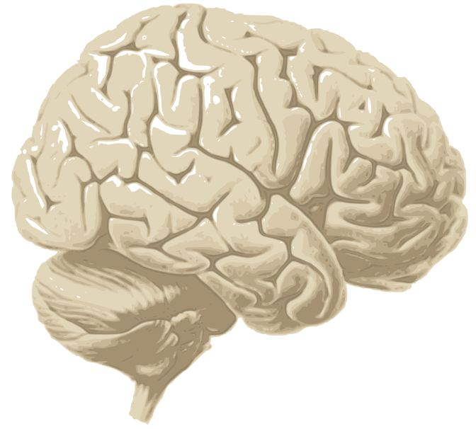 picture of brain