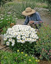 Michael in garden