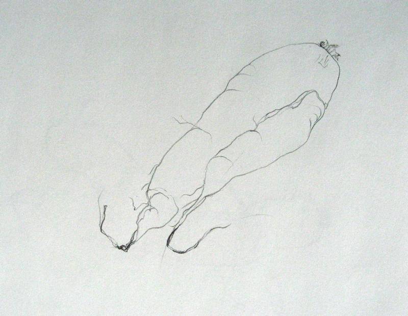 Carol's onion drawing