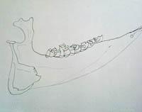 Lisa's jawbone drawing cropped