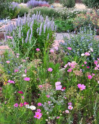 Marcia's garden overview