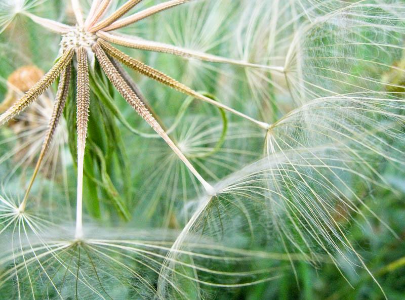 Weed seed puff