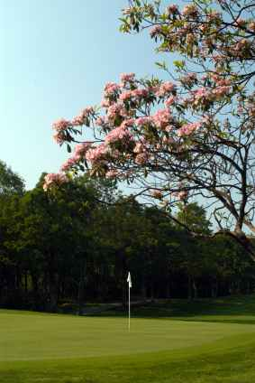 Golf Course Blooms