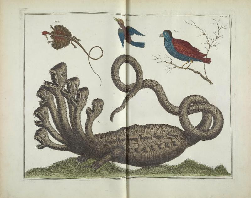 The Hydra! Seba, Albertus. Locupletissimi rerum naturalium thesauri accurata descriptio, et iconibus artificiosissimis expressio, per universam physices historiam. v. 1. 1734.