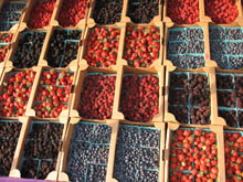 all kinds of berries
