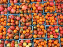 grid of cherry tomatoes
