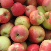 honey crisps