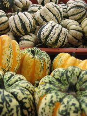 several types of winter squash
