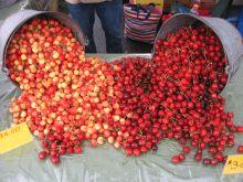 cherries at feeleys farm