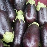 eggplant from happy harvest farm