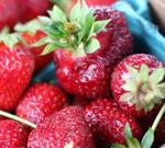 strawberries for festival
