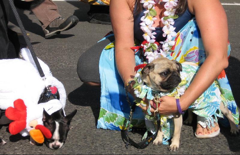 Pet Parade Winners