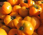 gorgeous orange tomatoes