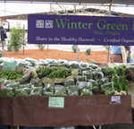 winter green stand may