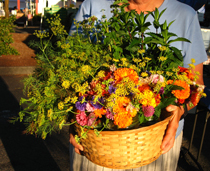 gorgeous basket of edible flowers and herbs