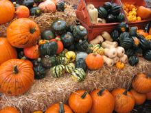 pretty pumpkins and squash from sweet leaf farm