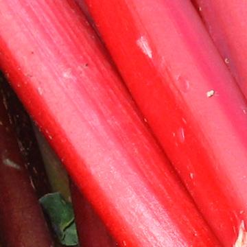 rhubarb up close
