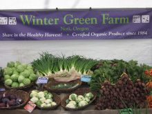 Winter Green Farm Display