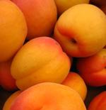 sunstripe apricots