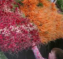 kid reaching for radish