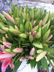 lilies at the market