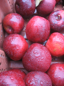 wet red apples