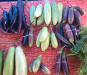 eggplant varieties from blooming goodies