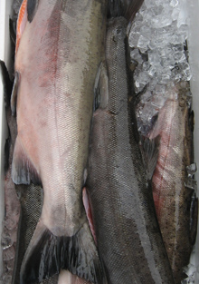 whole salmon from columbia river fish company