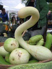an attractive curvy squash