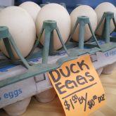 pine mountain ranch duck eggs