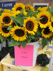 sunflower bunches from herr's family farm
