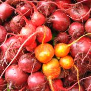 golden beets and regular beets