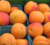 robata apricot