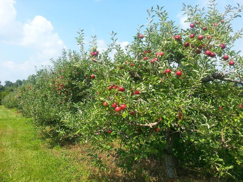 Von Jakob Apple Orchards