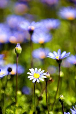 tiny-purple-flowers.jpg