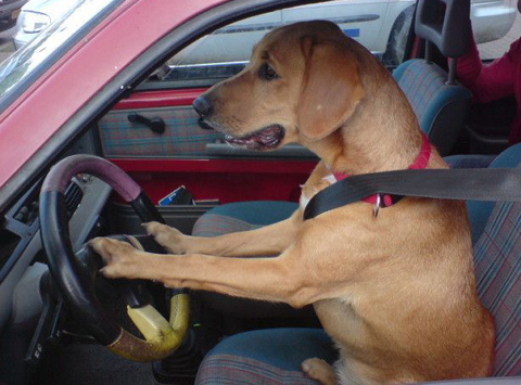 New Jersey The State Which Brings You Shore And Real Housewives Of Has Expanded Its Seat Belt Restraint Laws To Include Pets