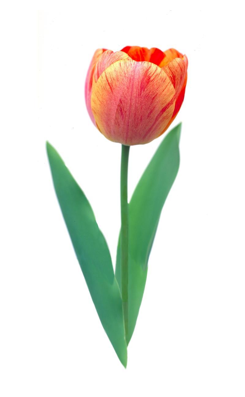 Photobotanic Logo