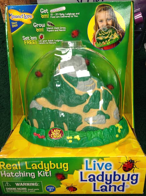 Ladybut hatching kit