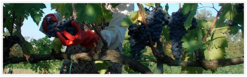 Vicario Tuscan Wines