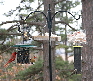 A variety of different feeders brings a variety of different birds.