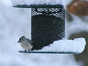 Don't forget to keep your feeders full especially when there is deep snow.