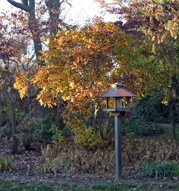 Late fall garden